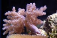 Sea Salt For Hard Corals